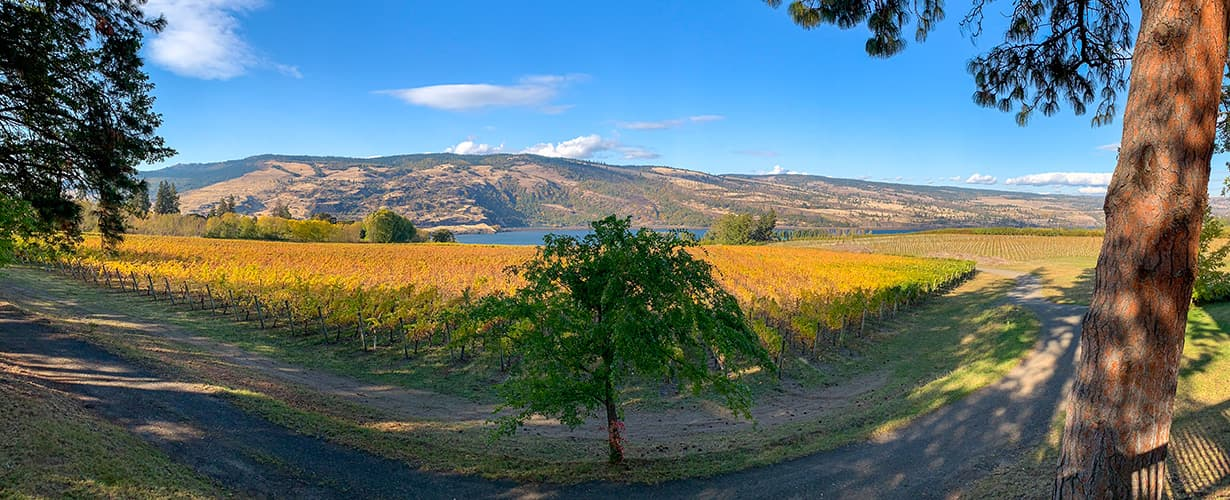Wine Tasting in the heart of the Columbia River Gorge and the Cascades